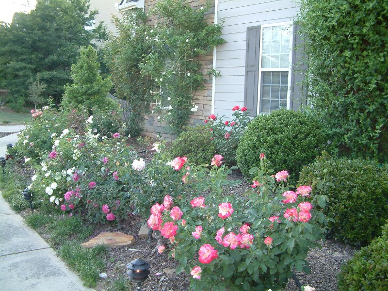 Front Yard Landscaping Roses : Like bookmark december at am
