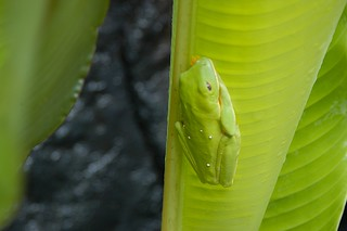 Tree Frog? in Zoo