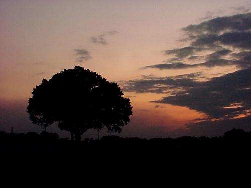 sunset sky silhouette rural florida okeechobee sonymavica wowiekazowie bestsun