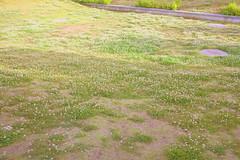 clover field at Ajinomoto Stadium