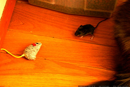 mouse escapes after playing dead    MG 2980