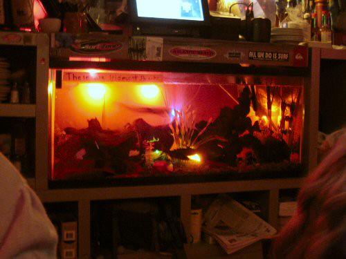 Surf bar fish tank flickr photo sharing for Fish tank bar