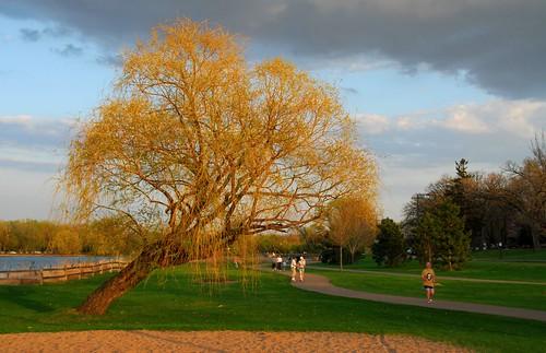 sunset lake tree minnesota dusk path lakeside shore twincities saintpaul naturesfinest