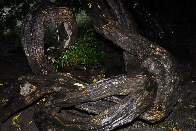 アナコンダの画像 p1_27