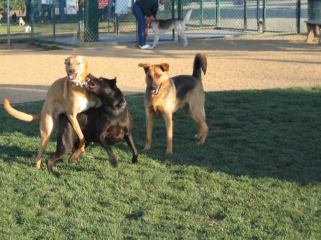Newhall Dog Park Clayton Ca