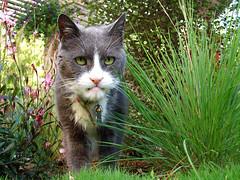 meet gumbo. he's 18. and has lips.
