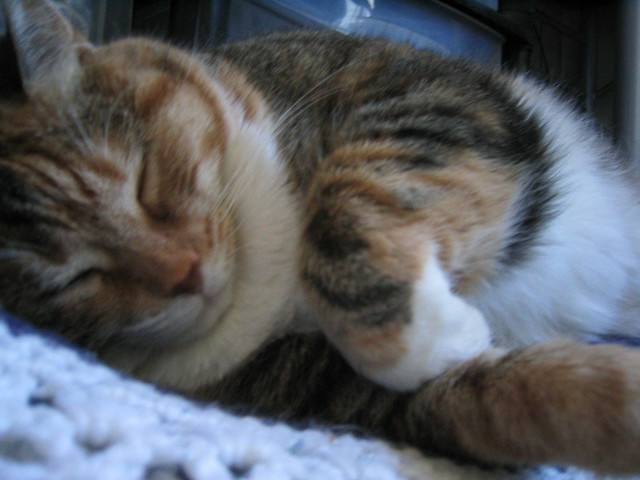 Snoozing Fat Cat