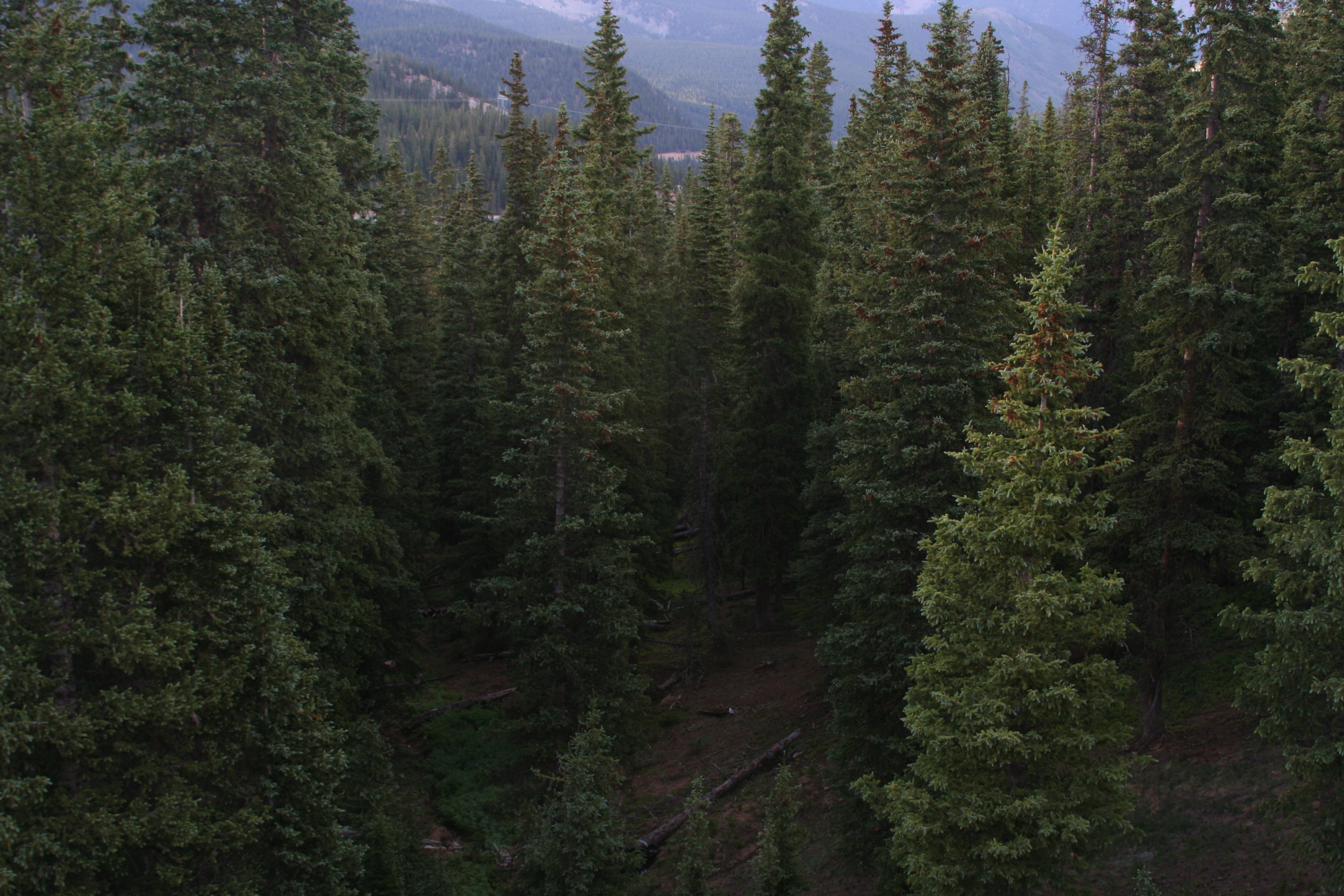 Mountain Background Tumblr Indie Forest Tumblr - ...