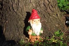 garden gnome, tree, lawn ornament, statue,