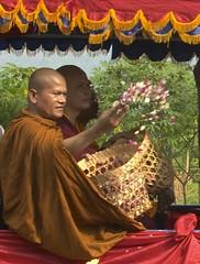Monk spreading petals