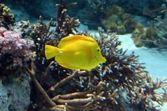 海洋博水族館 (6)