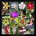 Atlanta Botanical Garden by Symbiosis