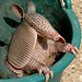 Armadillo Dees by Jeff Clow
