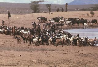 Cattle waterhole01a