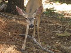 white-tailed deer(0.0), deer hunting(0.0), animal(1.0), deer(1.0), fauna(1.0), musk deer(1.0), wildlife(1.0),