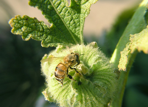 bee and bud