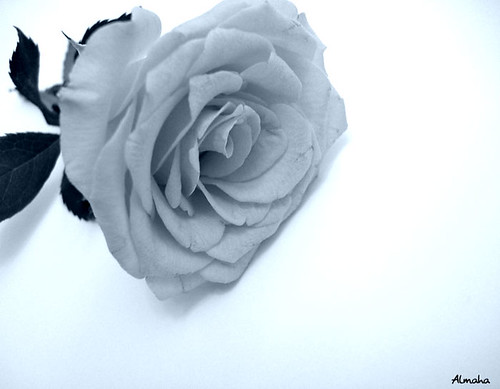 Black & white Rose!
