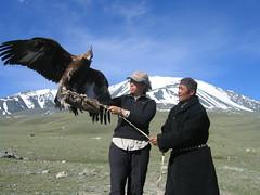 eagle, bird, condor,