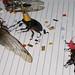 Backyard Bug Party by Matt Niemi