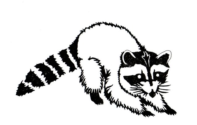Line Drawing Raccoon : Black and white raccoon drawing sketch coloring page