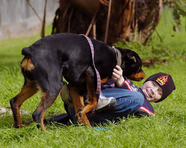 Dog Eats Grass Then Vomits