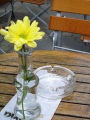 wine glass(0.0), mason jar(0.0), flower arranging(1.0), flower(1.0), yellow(1.0), floral design(1.0), plant(1.0), drinkware(1.0), centrepiece(1.0), glass(1.0), vase(1.0), floristry(1.0), lighting(1.0),