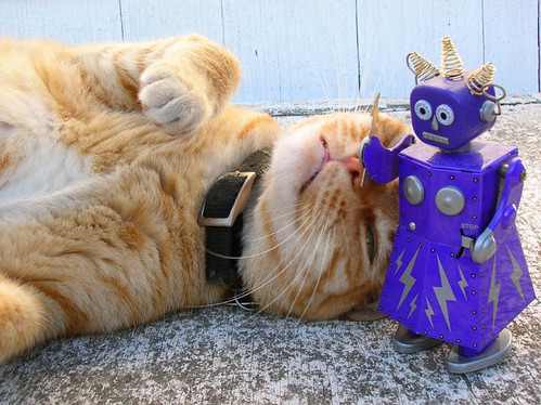 Cat and Robot