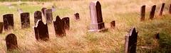 cemetery, grass, natural environment, grave,