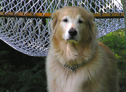 Dogs Don't Fit in Hammocks