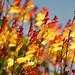 Flowers like a firework by Curlgirl1