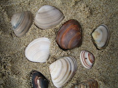 sea snail(0.0), food(0.0), conch(0.0), animal(1.0), clam(1.0), molluscs(1.0), seafood(1.0), seashell(1.0), fauna(1.0), cockle(1.0), clams, oysters, mussels and scallops(1.0),