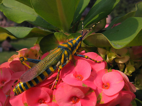 Grasshopper with flowers!