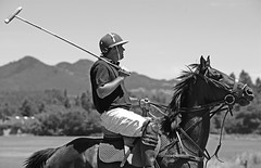 stick and ball games, animal sports, equestrian sport, sports, stick and ball sports, polo, monochrome photography, monochrome, black-and-white,