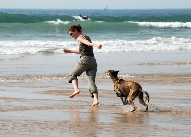 Porth Beach Dog Ban