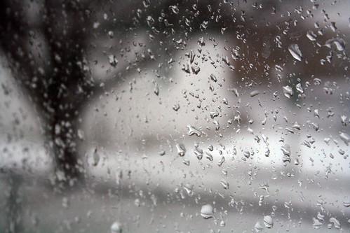 雨水。(來源:Roxanne)