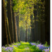 bluebell-lane 2 by tomelst
