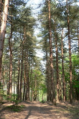 woodland, trail, tree, plant, old-growth forest, grove, forest, natural environment, wilderness, biome, temperate broadleaf and mixed forest, temperate coniferous forest,