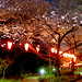 Cherry blossoms in Tokyo by spekul_1