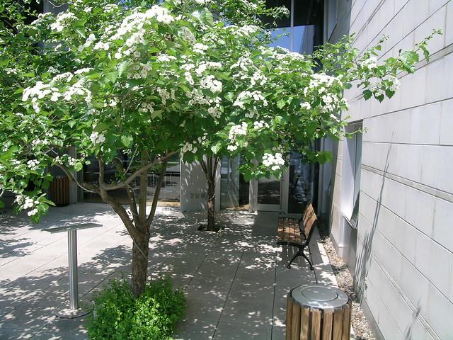 Hec montr al jardin int rieur flickr photo sharing - Jardin interieur montreal colombes ...