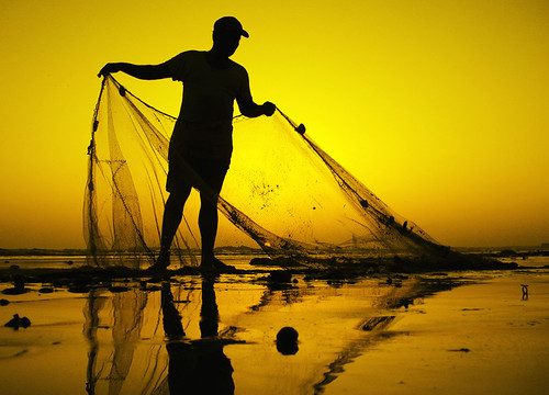 netting the Gold