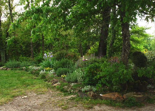 Planting Under Oak Trees : Can i garden under live oak woodland forum at permies