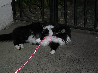 Thalia's disgusted with the leash!