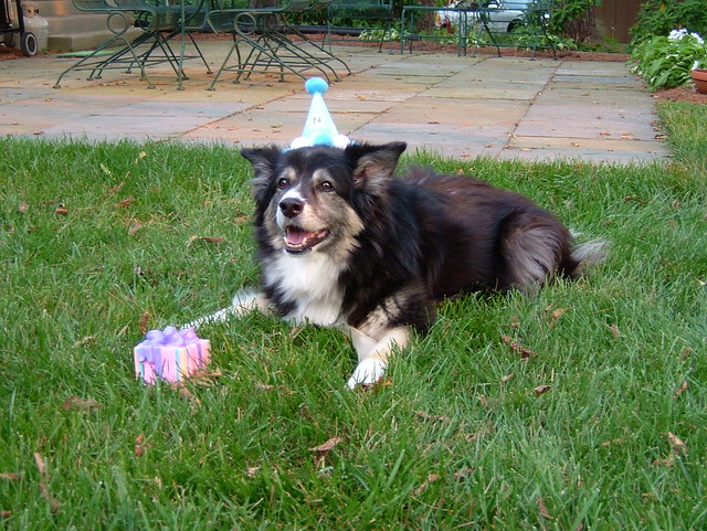 Birthday Dog!