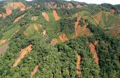 哥倫比亞的Antioquia區域,接近3000公頃的森林因砍伐及焚燒導致這些山崩(照片出處:SharedResponsibility)