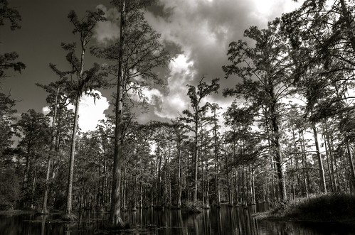 trees wallpaper water nikon swamp cypressgardens hdr d40