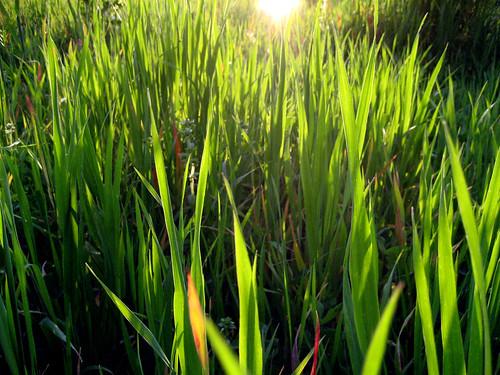 Verde nostro diserbante ecologico for Diserbante per erbacce