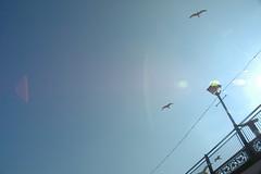 Sea gulls 02