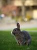 Happy Easter! by Kai Fuglem