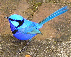 animal, perching bird, wing, fauna, beak, bird,