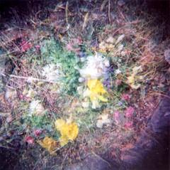 Flower Garden, Quadruple Exposure